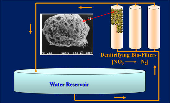 Novel Biofilters to Reduce Nitrate Levels in water