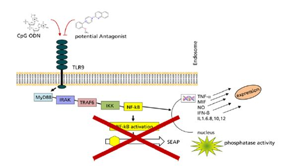 Small Molecules Antagonists Of Toll Like Receptor 9 For Treatment Of Inflammatory Conditions