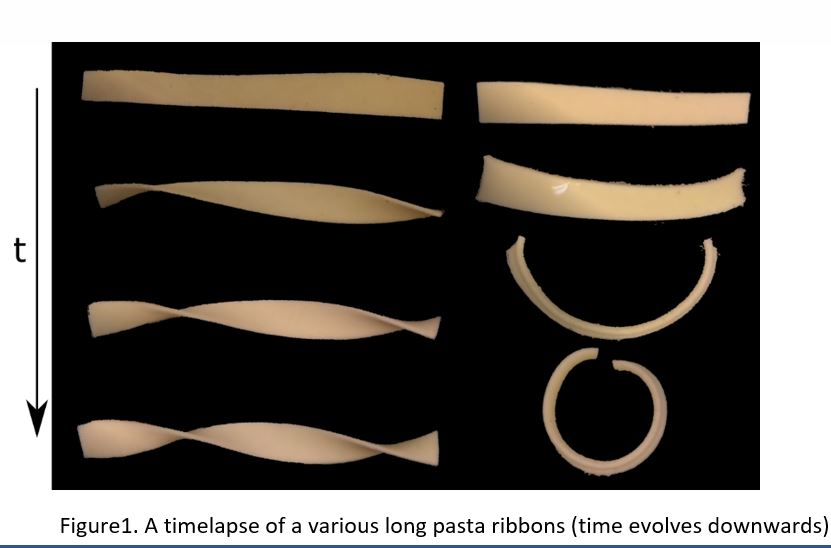 Shape-Shifting Pasta: From Flat to Twists and Twirls