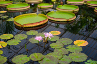 Seeking a botanic extract for urinary health