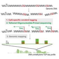 TOP-seq: technology for high-resolution economical analysis of DNA epigenome